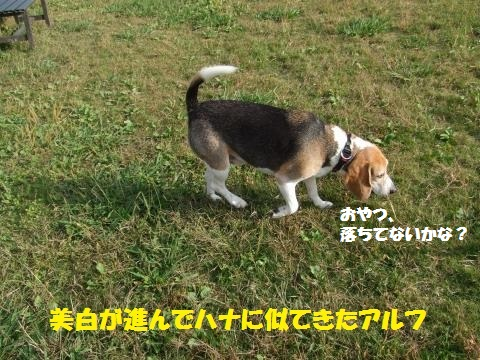 021_convert_20141027032115.jpg