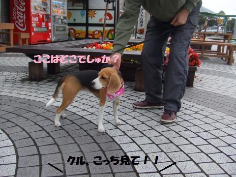 033_convert_20141115070440.jpg