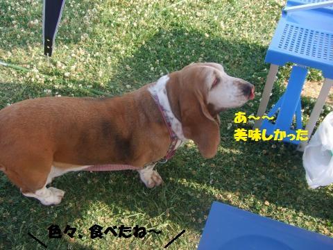 035_convert_20130527012315.jpg