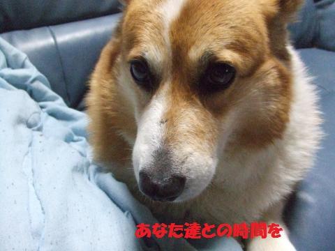 036_convert_20130312024116.jpg
