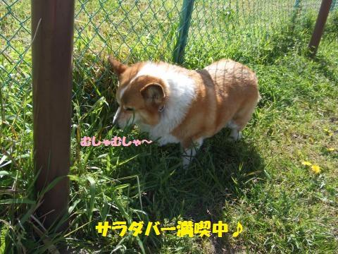 047_convert_20130504050617.jpg