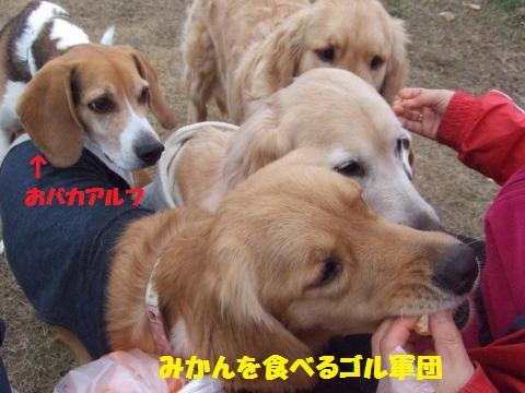 056_convert_20130121021044.jpg