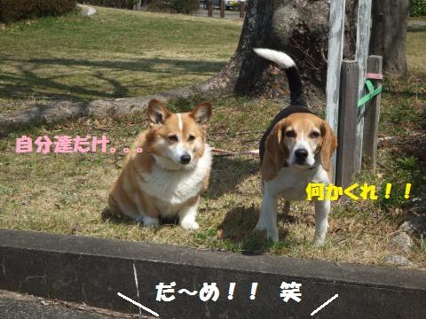 056_convert_20130401015035.jpg