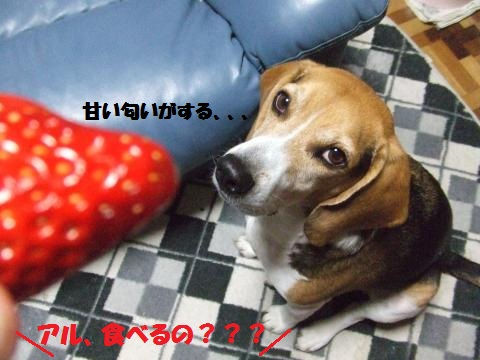 057_convert_20130121015119.jpg