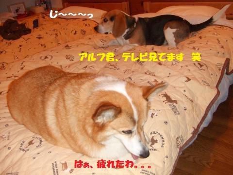 097_convert_20130507025134.jpg