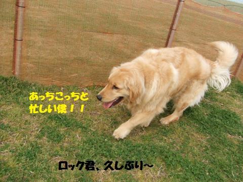 109_convert_20130410053016.jpg