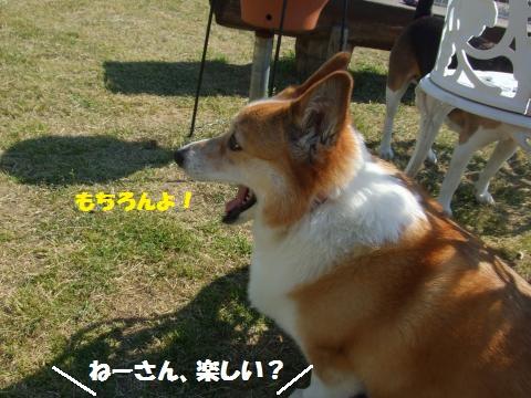 114_convert_20130507024813.jpg