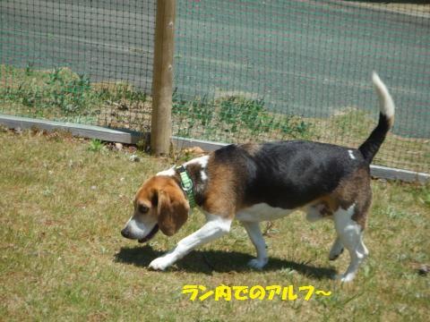 161_convert_20130510014757.jpg