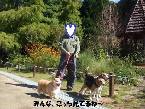 214_convert_20141204063350.jpg