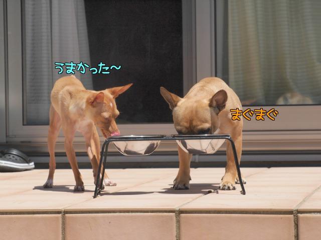 3_20120626012200.jpg