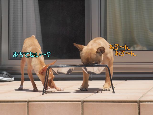 4_20120626012159.jpg