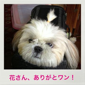 あんちゃんin bag