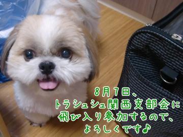 CIMG9579-2.jpg