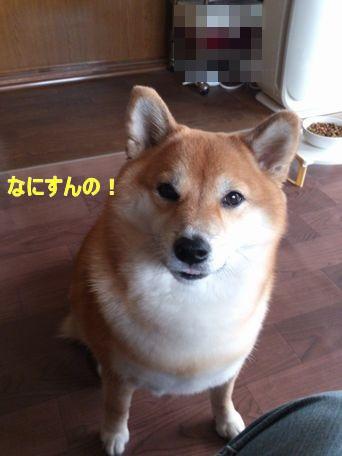 DSC_0144_2013102021462367f.jpg