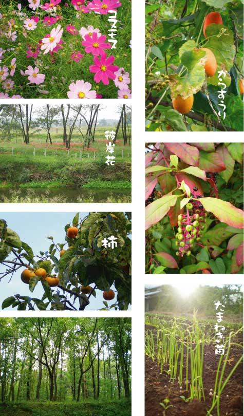 秋風景201310
