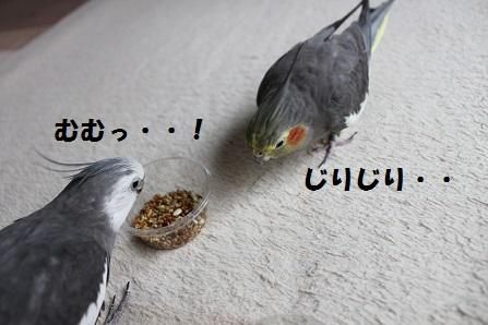 がんばれ~!マロンっ!