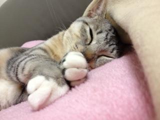クーコ寝る