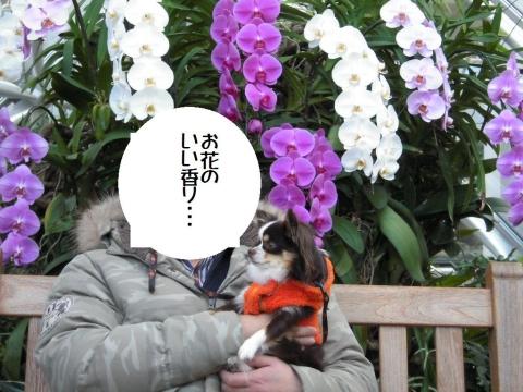 DSCN0826 花の都