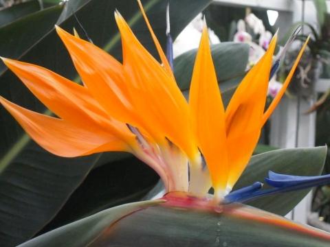 DSCN0823 花の都
