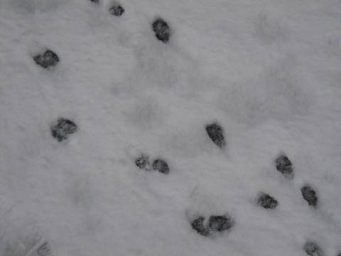 DSCN9887 雪2.8