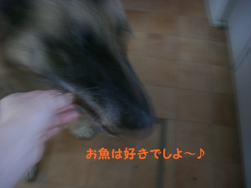 CIMG6086.jpg