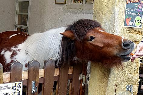 お馬さん♪
