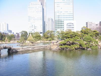 ぶらり散歩浜松町~築地~銀座 かんの (5)
