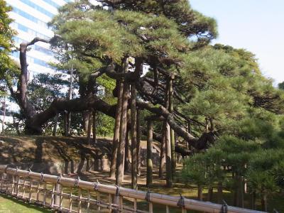 ぶらり散歩浜松町~築地~銀座 かんの (21)
