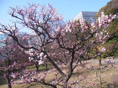 ぶらり散歩浜松町~築地~銀座 かんの (15)