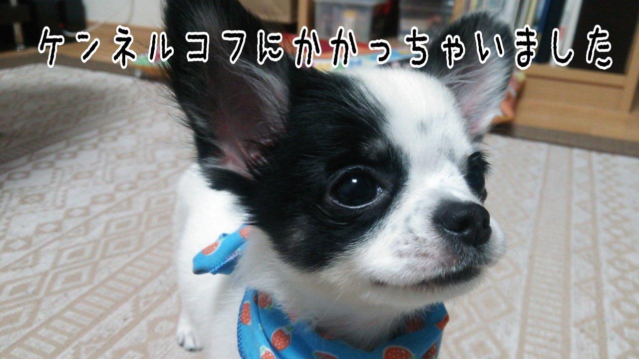 LINEcamera_share_2014-10-15-13-58-30.jpg