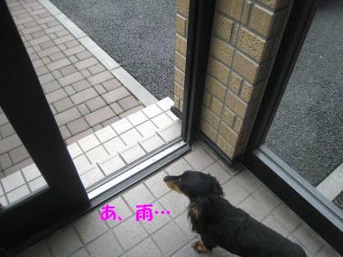 IMG_9764-3.jpg