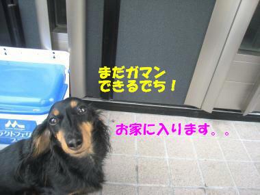 IMG_9765-3.jpg
