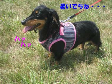 IMG_9815-3.jpg