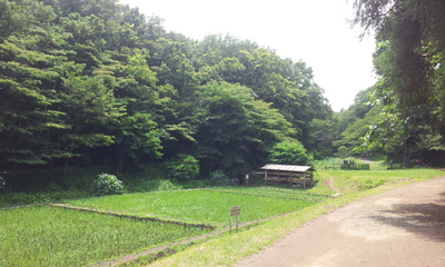 こども自然公園.3