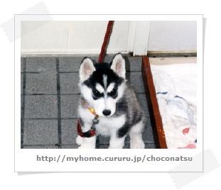 image8584293.jpg