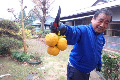 ゴロパパの柚子2014 (6)
