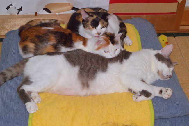 メリー&ミー&ギンちゃんv01ブログ