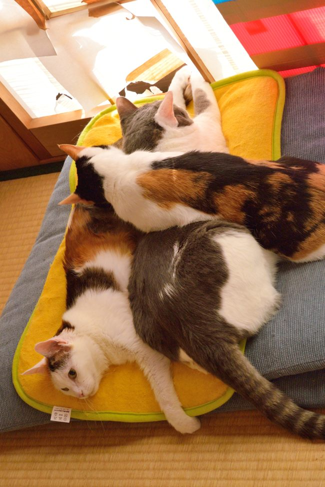 猫たちv07ブログ