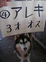 ④アレキ オス 3歳