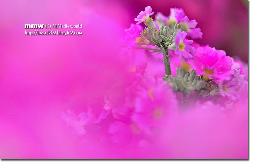 2014_2_11.jpg