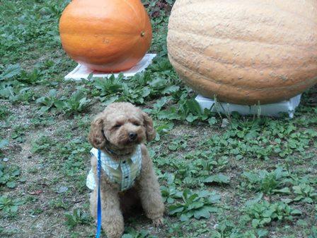 ミッキーとかぼちゃ
