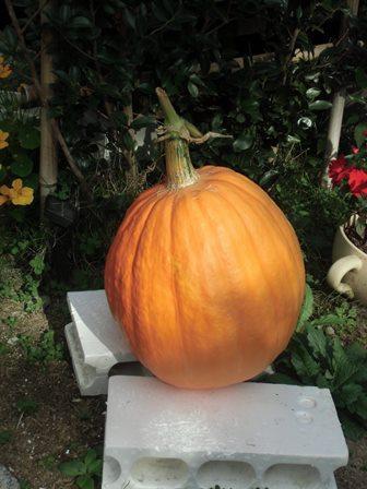 かぼちゃこ