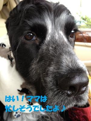IMG_2624_convert_20120331102223.jpg