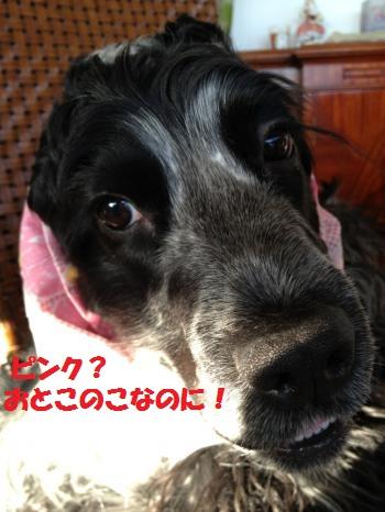 IMG_4031_convert_20120404063702.jpg
