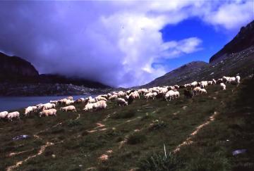 羊祭り+7_convert_20130320111635