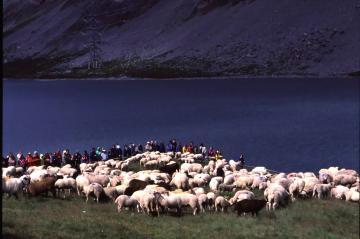 羊祭り+3_convert_20130320111534