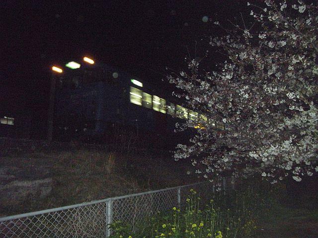 電車と桜と菜の花と