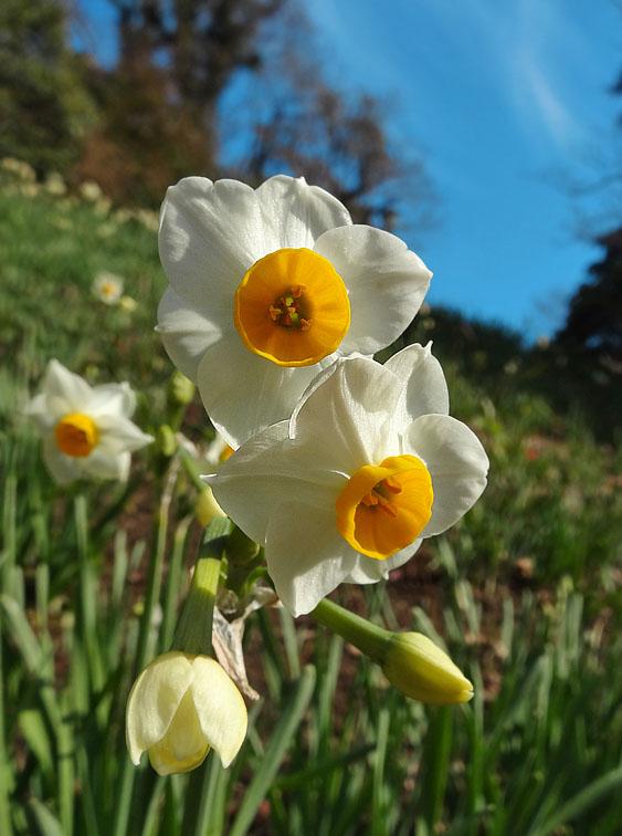 130113花の国アイスチューリップ5