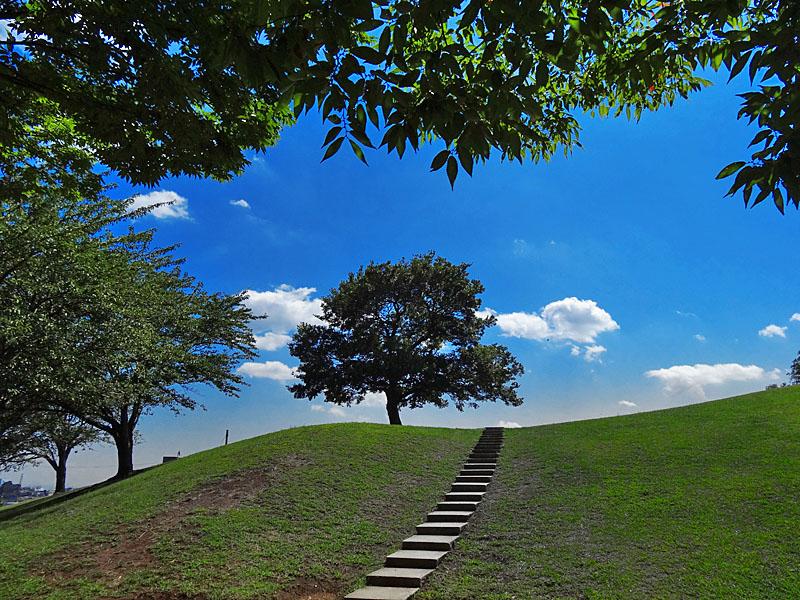 130827今日の榎の丘1