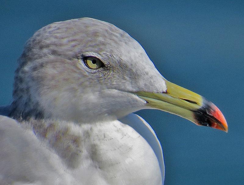 野鳥の怒り1